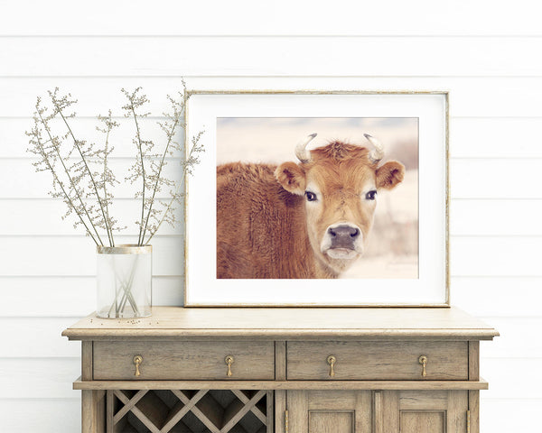 Cute Cow Photograph, Farm and Country Wall Art, Animal Photography in Nature, Physical Print