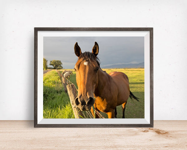 Summer Bay Horse Photo, Color Photography, Equestrian Art, Physical Print