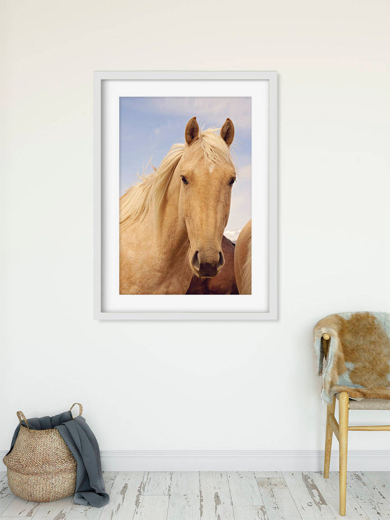 Palomino Horse photograph in color, Equestrian Wall Art, Physical Print