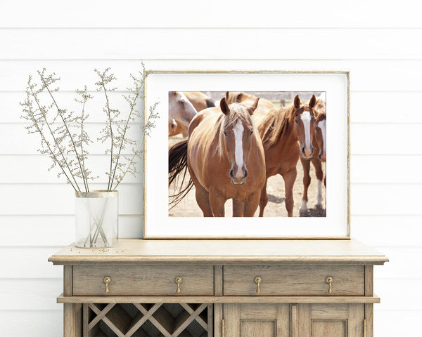 Western Horse Print, Rodeo Horses Photograph, Physical Print
