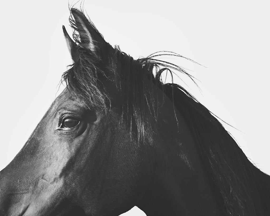 Horse Profile Photograph in Black and White, Equestrian Wall Art