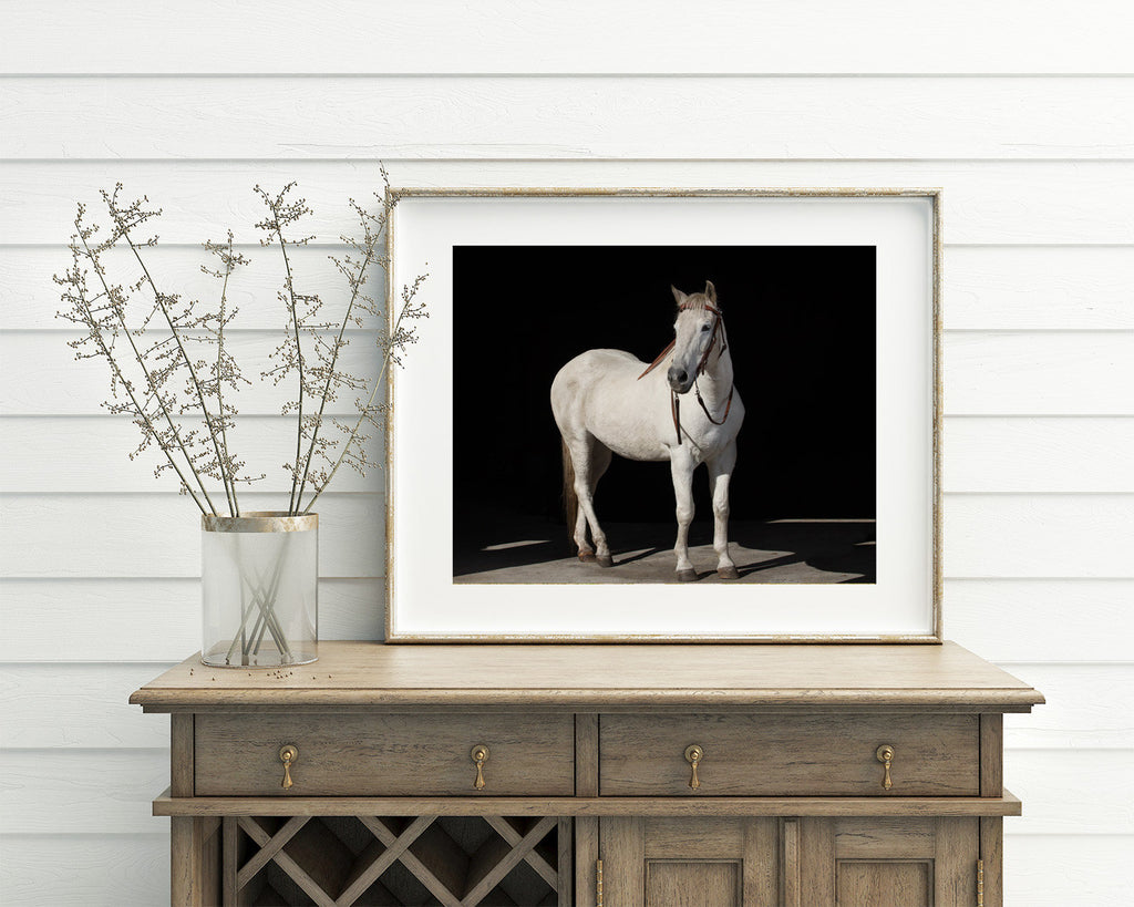 Equestrian Wall Art, White Horse with Black Background, PHYSICAL PRINT, Color