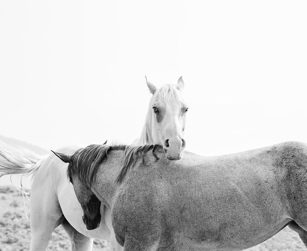Modern Horse Photography in black and white, PHYSICAL PRINT, Animal Wall Art