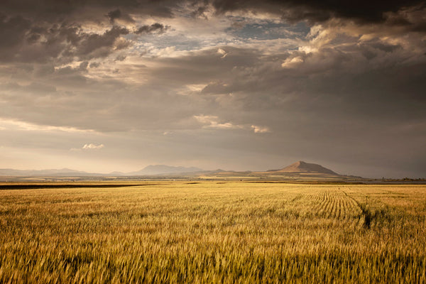 Golden Fields Western Photograph, Color Landscape Photography, Physical Farm Print