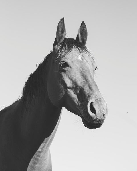 Simple Horse Portrait