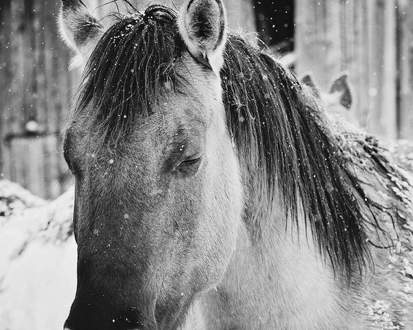 Quiet Winter Horse Photograph
