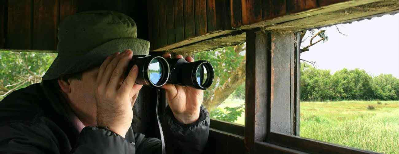 Man using binoculars in hide