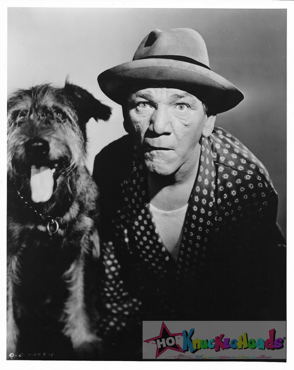 Three Stooges Shemp Dog 8X10: #29