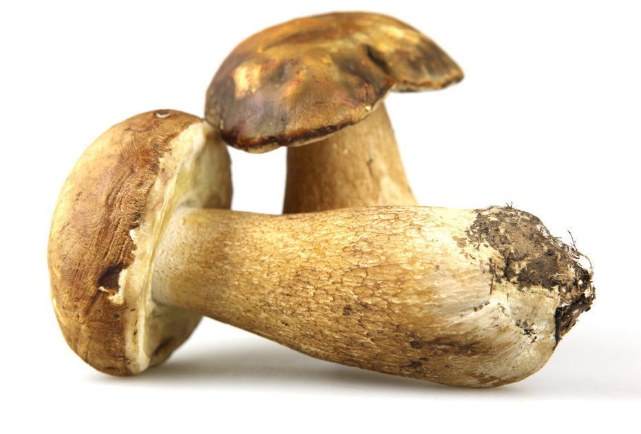 1) What's all the fuss about Porcini Mushrooms? | Rhayne