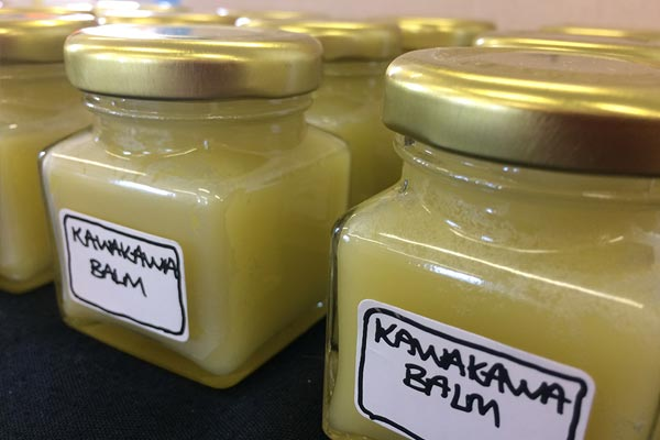 Kawakawa – cough improver, tooth-ache reliever and  headache buster