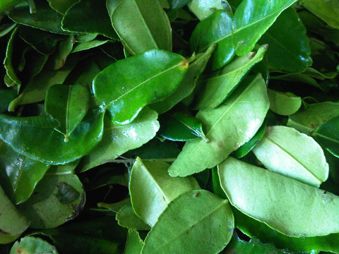 Kaffir Lime Leaf and Makrut Lime Leaf