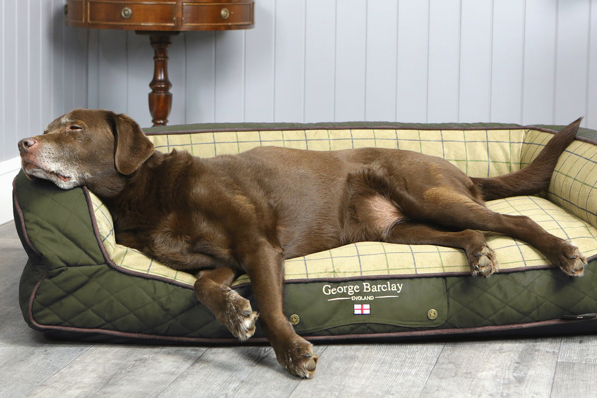 How to Choose a Dog Bed for an Older or Senior Dog