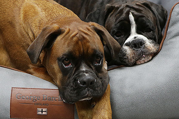 Choosing a Dog Bed For More Than One Dog