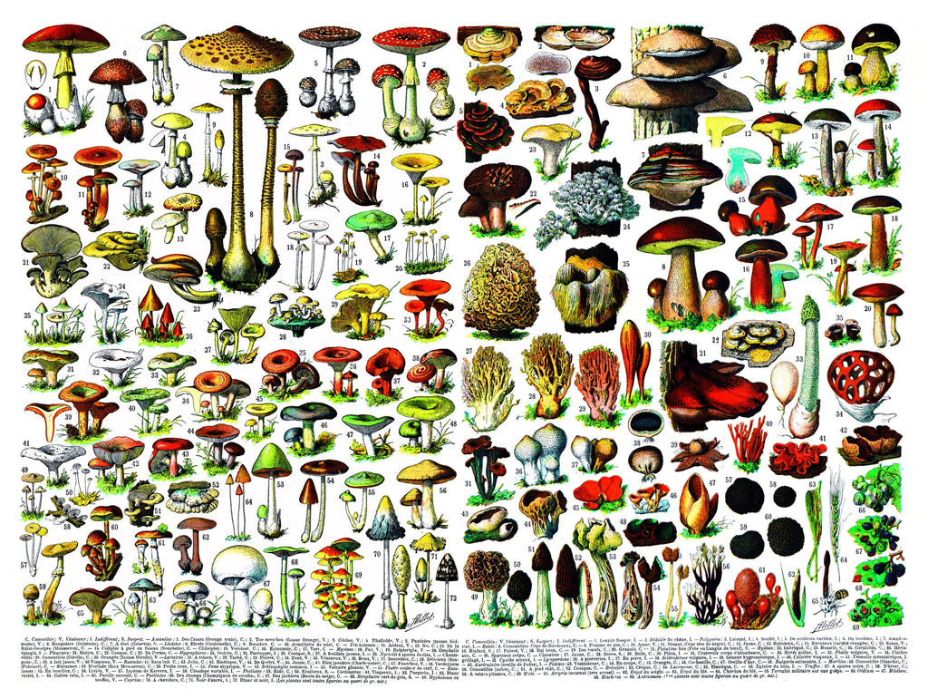 detail of mushroom puzzle 1000 pieces New York Puzzle Company