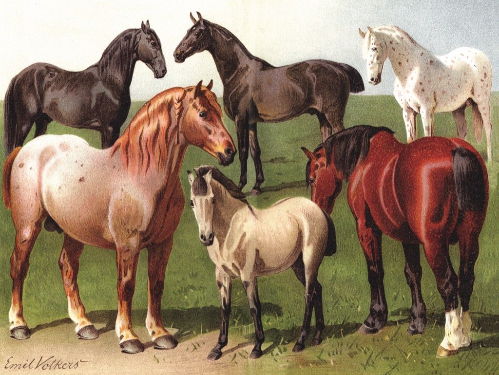 Horse Breeds Jigsaw Puzzle - 1000pc