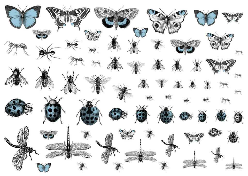 Creepy Crawlies - Light blue and black