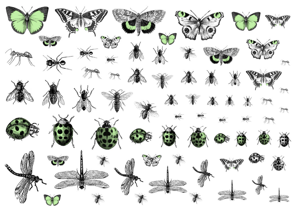 Creepy Crawlies - Light green and black
