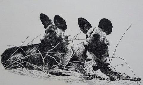 Limited edition wildlife prints - Wild Dogs