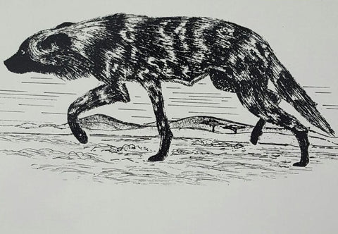 Limited edition wildlife prints - Hyena