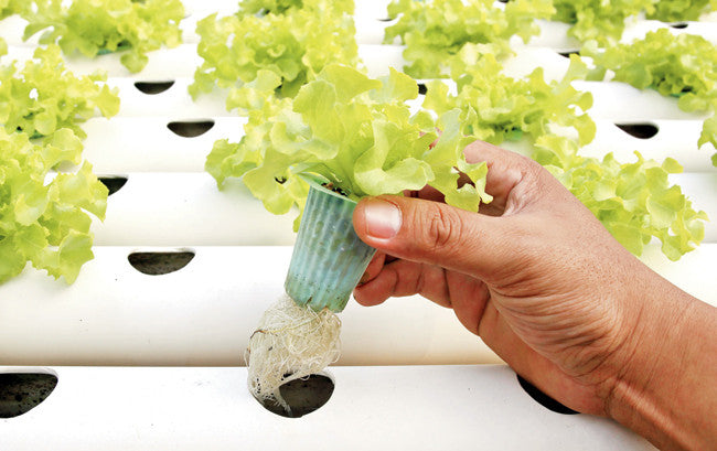 Why does Hydroponics work so well?