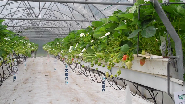 Learn Hydroponic Food Production Systems