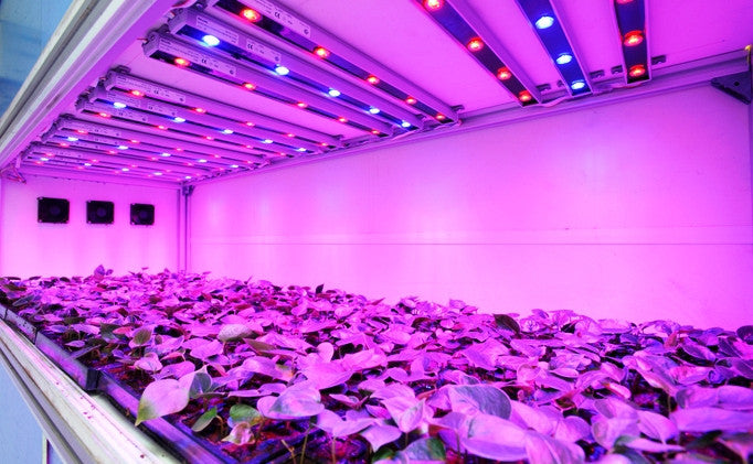 How To Choose the Right Grow Light