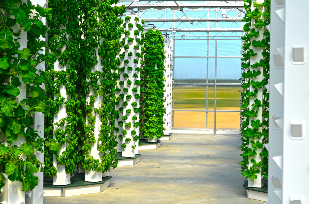 Hydroponics: All You need to Know!