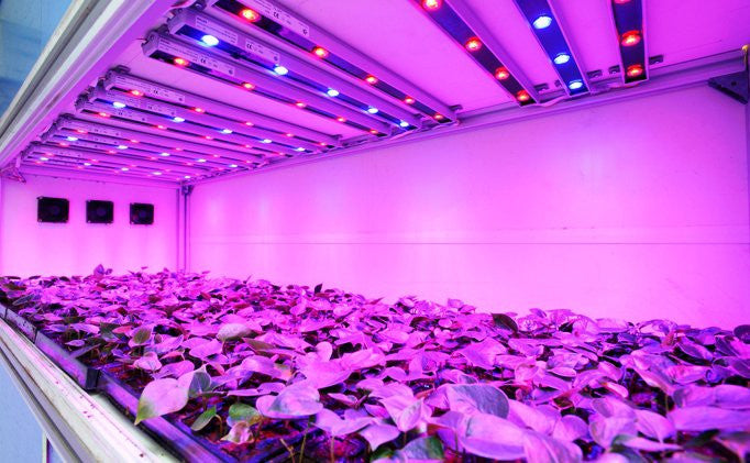 Which grow lights are best for you?