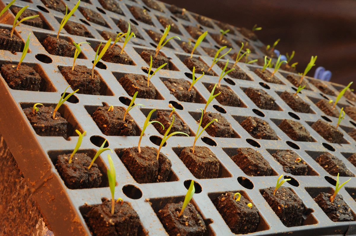 STARTING SEEDLINGS IN HYDROPONICS