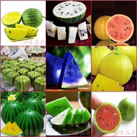 150pcs Very Sweet Watermelon Seed fruit seeds for Patio / Balcony Garden Planting Red / Yellow / White / Blue