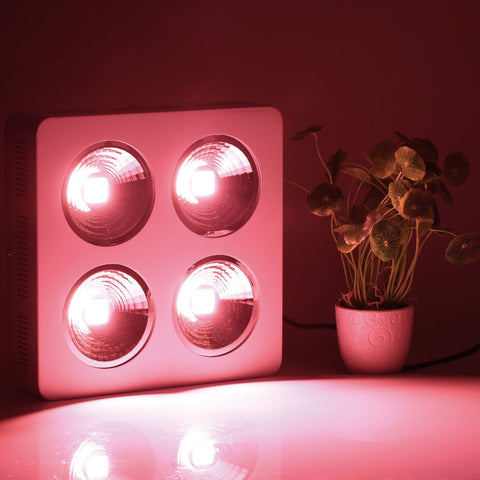 800W COB Led Grow Light with reflector for Hydroponic indoor Medical Plant