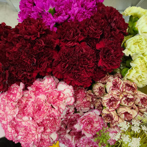 Carnation Novelty Fancy Assorted - Going Bloom
