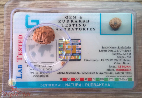 12 Mukhi Certified Rudraksh (Indonesian Java)