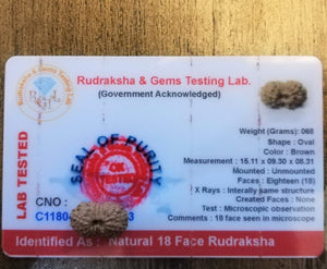 18 Mukhi Certified Rudraksha (Indonesian Java)