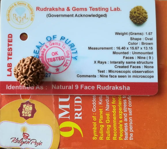 9 Mukhi face Rudraksha Certified - Indonesian Java