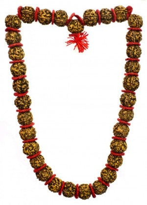 Rudraksh Mala 54 1 Big Beads Nepal Kalyanpuja 3.9 out of 5 stars 98 ratings. rudraksh mala 54 1 big beads nepal
