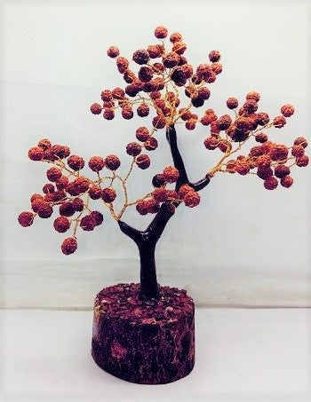 rudraksha tree decorative