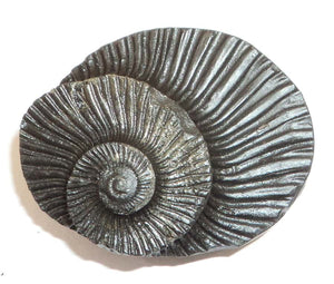 Shaligram Sudarshan