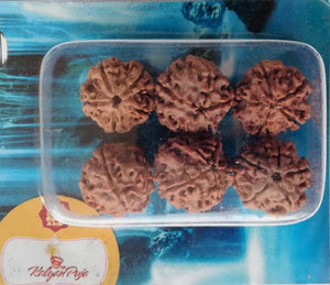 Rudraksha therapy water beads