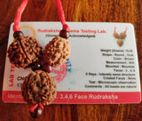rudraksha for education children