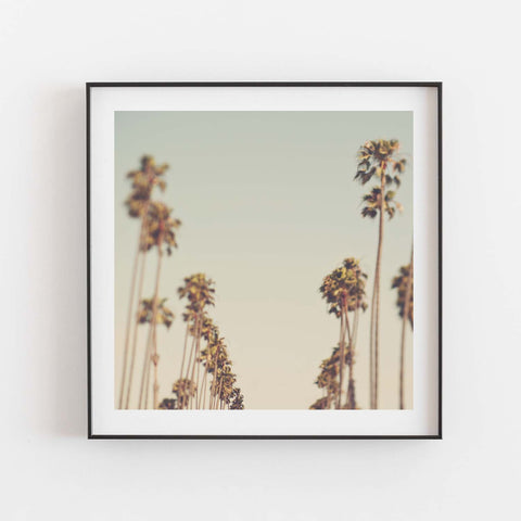 Framed LA palm trees photo. Dreamy blue green sky.