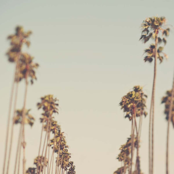 Photograph of dreamy palm tree lined street in Los Angeles California