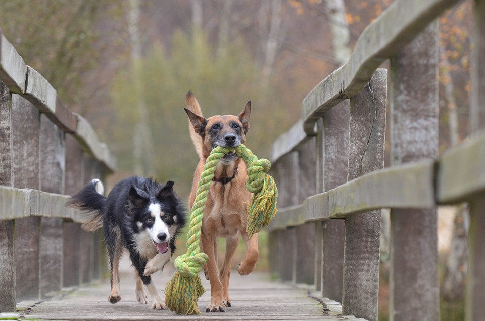 What to Look for When Buying Safe Dog Toys