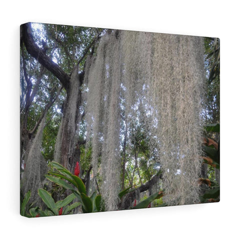 Mossy Tree Canvas Photo Art
