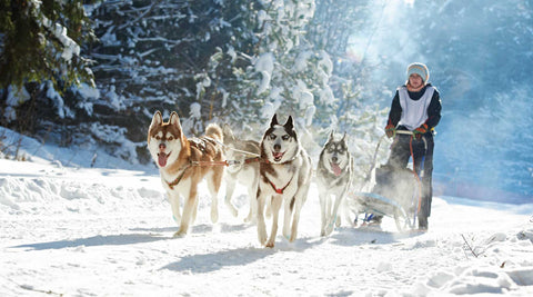dog sledding with heated jacket