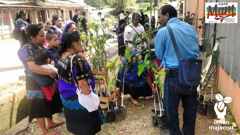 Shade and fruit tree delivery to women producers for Majomut Coop