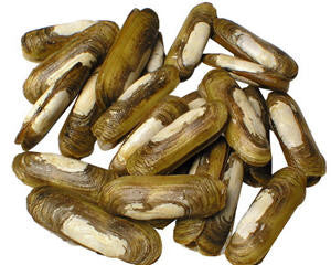 蛏子 Razor Clam, 10.99/lb+15% Service Fee, Order by Pound