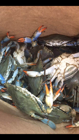 青蟹仔Blue Crab 6.99/lb+15%Service fee, 6piece/2lb, order by 2lb