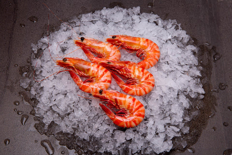 Tiger Prawns Cooked XLarge (5KG Frozen Carton)