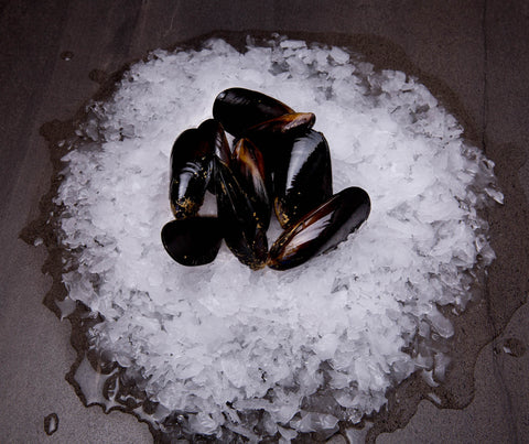 Black Mussels LIVE